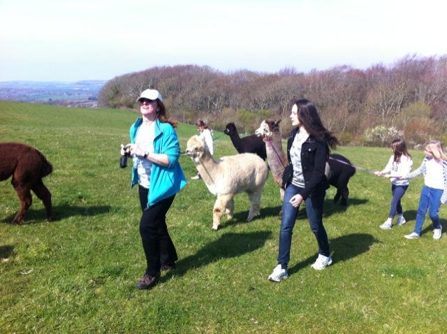 children leading alpacas